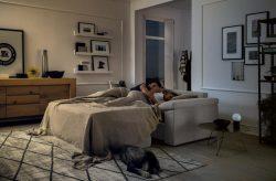 House Felis